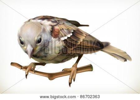 Sparrow, vector illustration