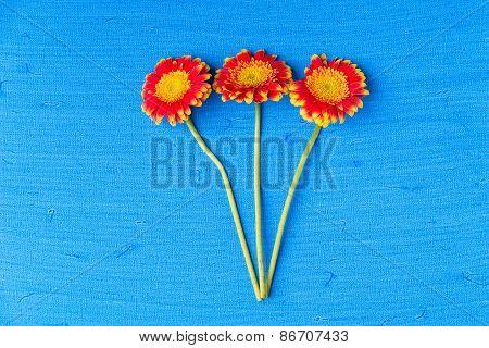 Three Gerbera Daisy Flowers On Blue Textured Canvas Background