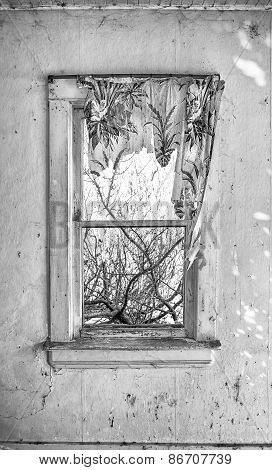 Tattered curtain on old window