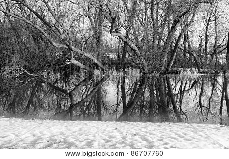 Reflecting tree limbs in water