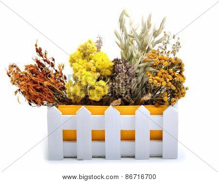 Herbs, Calendula Flower, Oats, Immortelle Flower, Tansy Herb Isolated On White