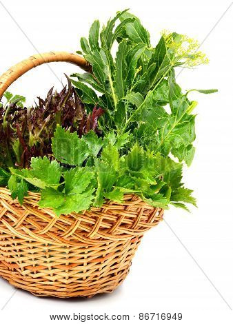 Bunch Of Different Red And Green Curly Lettuce, Water-cress, Spinach With Parsley In The Basket