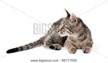 Cute kitten isolated on white
