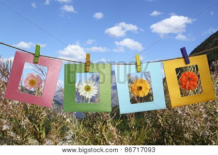 Beautiful Photos Of Flowers In Frame With Clothespins