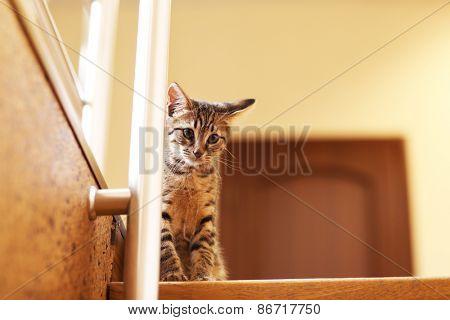 Kitten on staircase, indoors