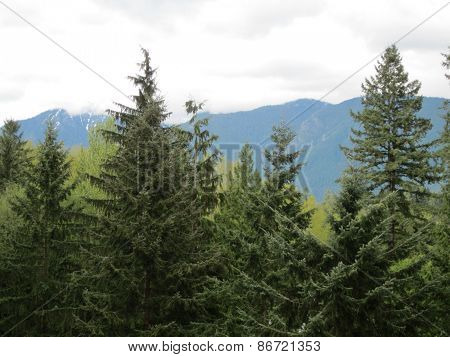 mountains & evergreen trees