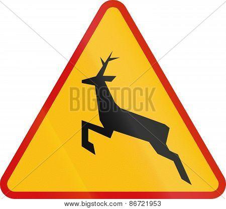 Wild Animals Crossing In Poland
