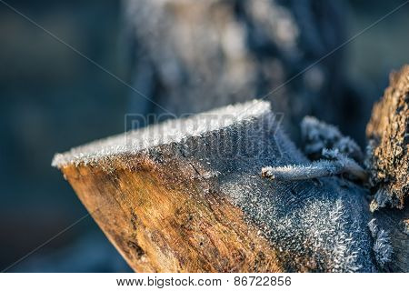 Tree Trunk Covered With Ice Crystals