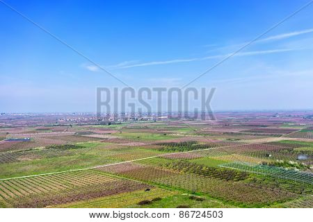 Aerial Photographs Blooming Peach Trees In An Orchard