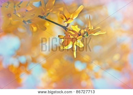 Yellow flowers on tree lit by sunlight