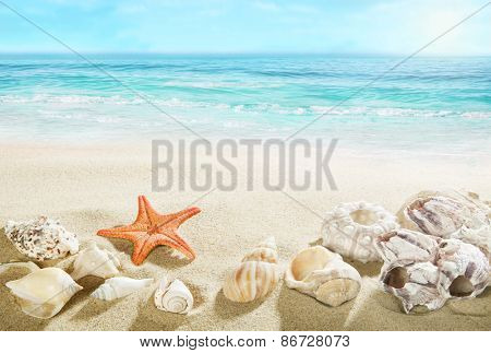 Shells on the beach.