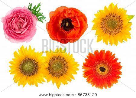 Single Flower Heads. Ranunculus, Sunflower, Gerber