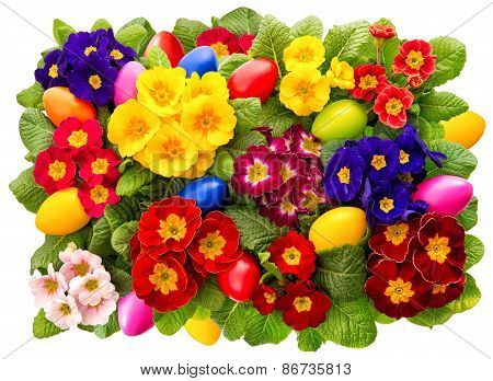 Primula Flowers With Easter Eggs Decoration. Spring Blossoms