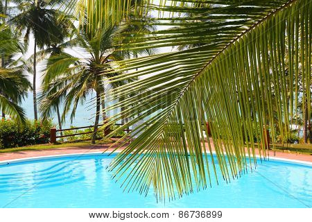 palm leaf in front of the swimming pool by the sea on a tropical resort