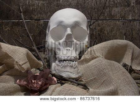 Skull and flower.