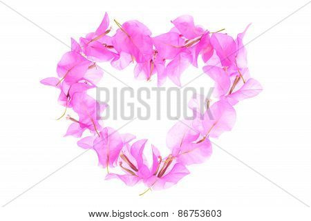 Bougainvillea Flowers Heart Shape Isolated On White Background