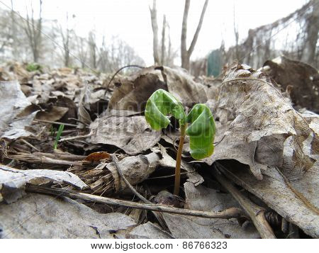 sprout from the ground
