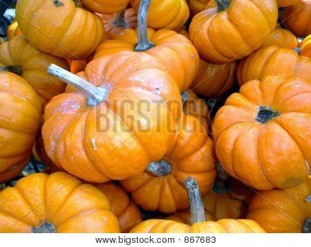 Orange Tiny Pumpkins