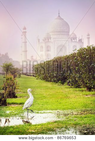 Bird Near Taj Mahal