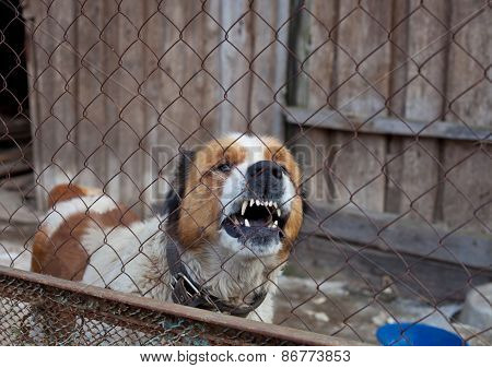 Aggressive Dog In Cage