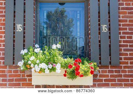 Red And White Flowers In A Window Box