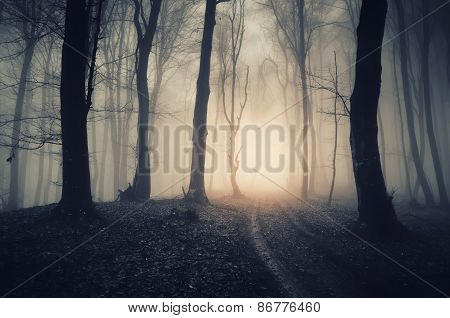 Road in haunted forest with fog