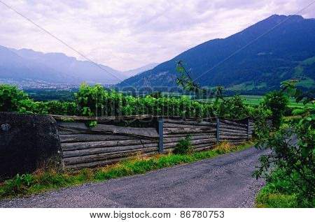 Road through a Vineyard in Rhine Valley (Switzerland) with Grapes Ripening