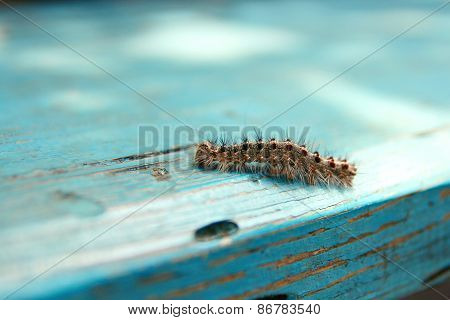 Caterpillar On The Wooden Background