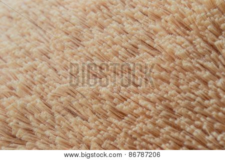 texture of plush