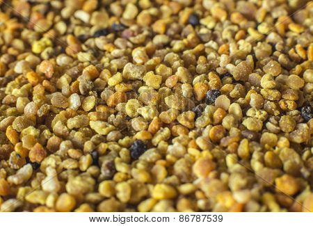 Pollen granules background - macro photo
