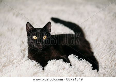Little Black Kitten On Bed