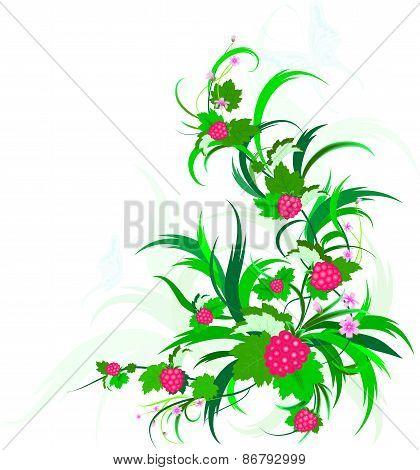Raspberry.eps