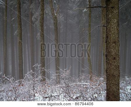 Winter Wood Fog