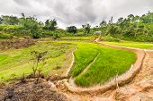 stock photo of mud-hut  - Stunning landscape and bright rice fields in Mamasa Region West Tana Toraja South Sulawesi Indonesia - JPG