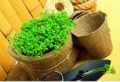 image of shovel  - Cress salad on the flower bed with rake shovel peat cups rope against wooden fence - JPG