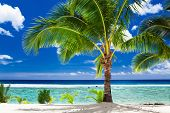 foto of beachfront  - A single palm tree overlooking tropical beach on Rarotonga - JPG