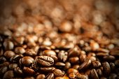 picture of coffee crop  - coffee beans background - JPG