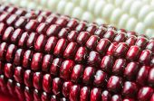 foto of corn cob close-up  - Photo cobs of corn lying on the table - JPG