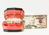 stock photo of dentures  - Dental phantom dentures isolated on white background with money behind - JPG