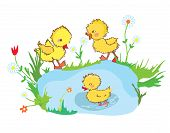 stock photo of duck pond  - Funny ducks in the pond and flowers  - JPG
