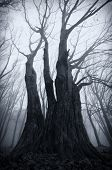 stock photo of surreal  - Trees in dark Haunted forest with fog on Halloween - JPG