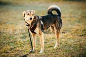 stock photo of mongrel dog  - Mixed Breed Medium Size Three Legged Dog Standing At An Angle Looking Off To Side Of Camera - JPG