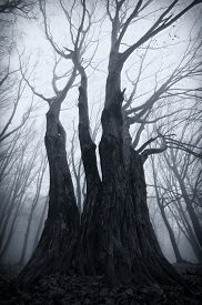 picture of rainy season  - Trees in dark Haunted forest with fog on Halloween - JPG