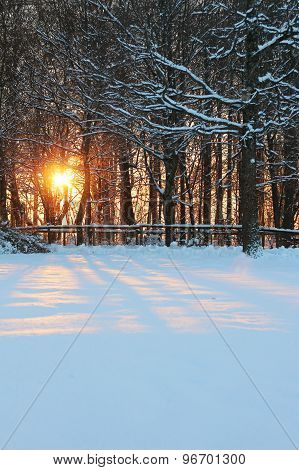 Bright Orange Sunset Between Trees In The Snow.