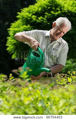 Elder Man Watering Plants