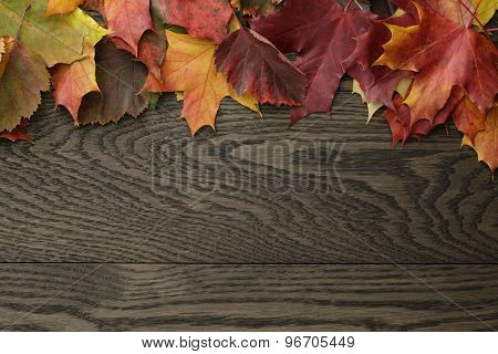 autumn leaves directly from above