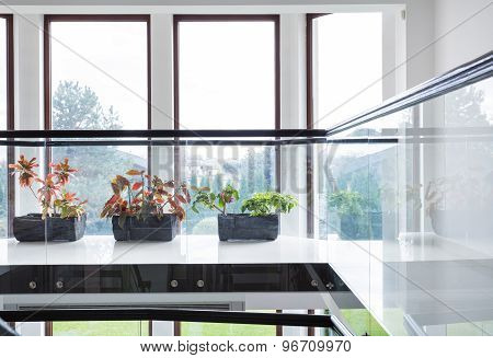 Green Plants On Window Sill