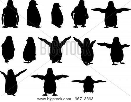 Baby Animal Penguin Silhouette