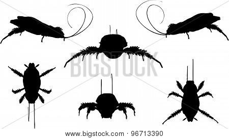 Cockroach Silhouette