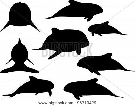 Baby Animals Orca Silhouette